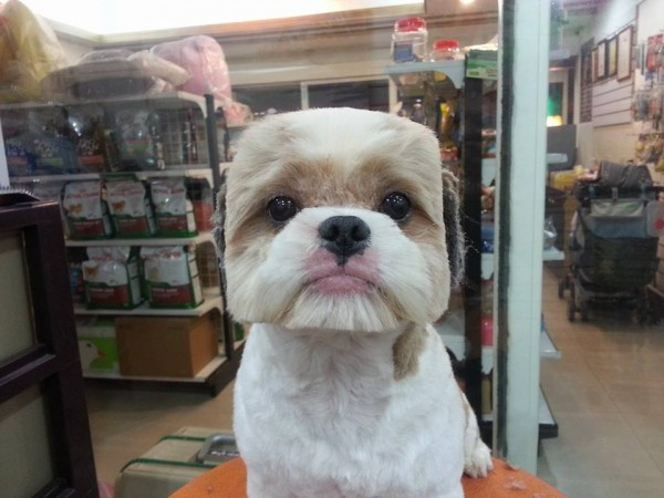 This is the hottest new haircut trend. . .for dogs