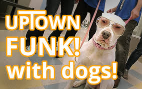 "This ""Uptown Funk"" parody with dogs is too adorbs for words"
