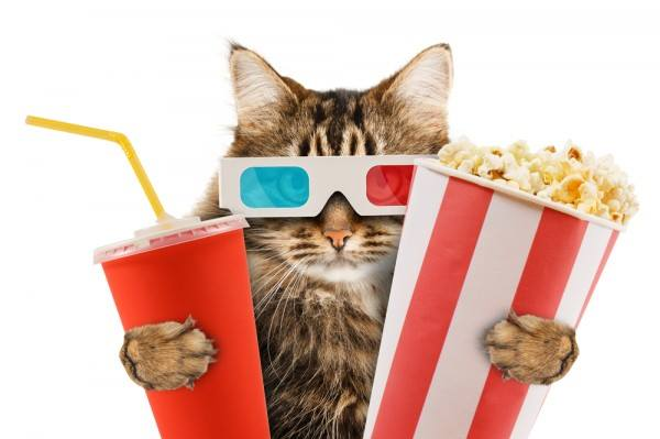 This cat movie theater takes cat cafés to the next level