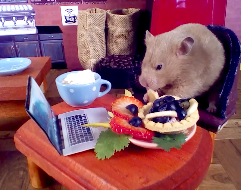 Cute Critter Cafe: A hedgehog and a hamster get their own miniature coffee shop