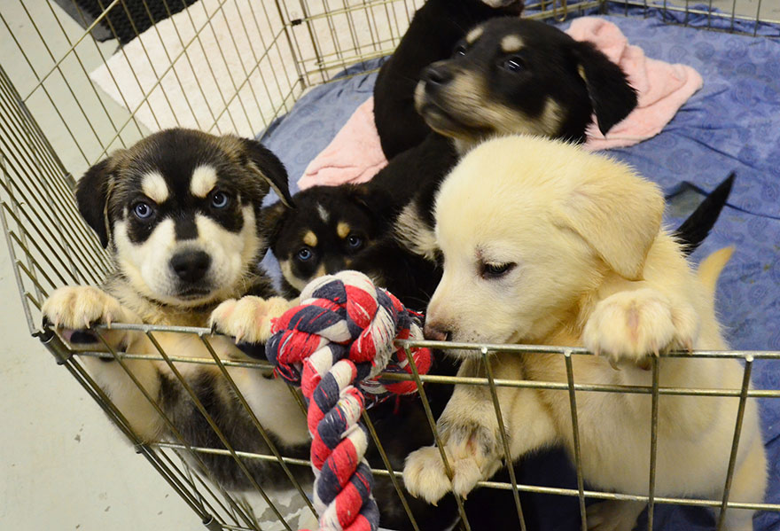 School creates puppy room to help students deal with stress, is officially the best school ever