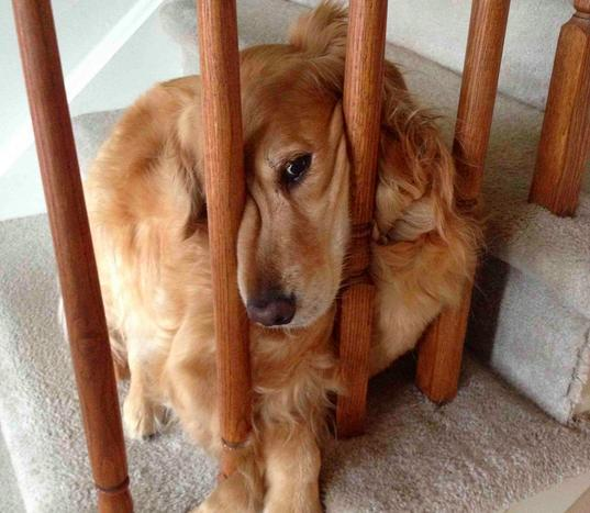 21 pets who have a complicated relationship with stairs