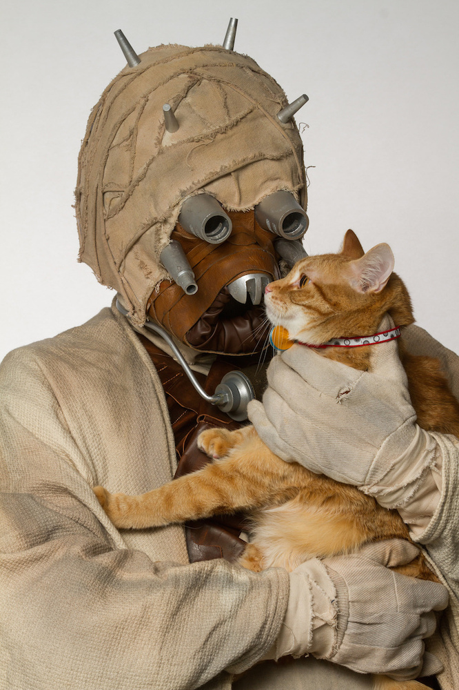 We are madly in love with this animal rescue's Star Wars-themed photo shoot