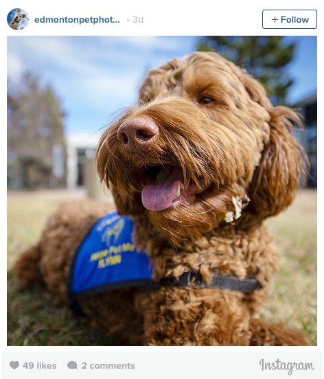 Looking at #therapydogs on Instagram actually makes us feel better