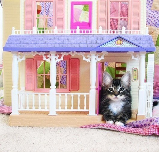 Just some cats living in dollhouses, fulfilling our childhood dreams