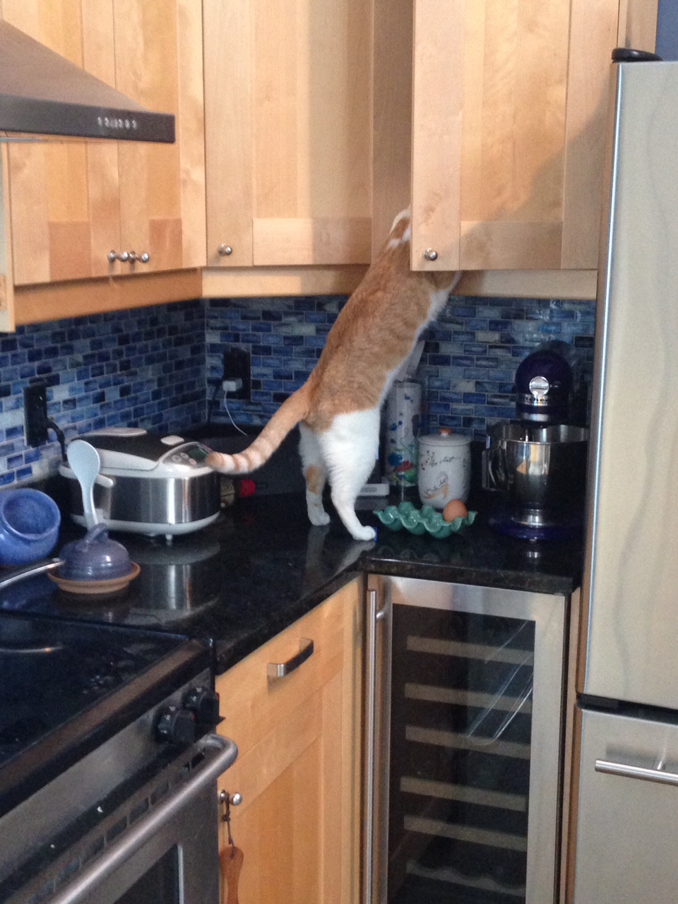 13 pets who've figured out how to feed themselves, thankyouverymuch