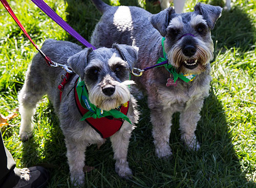 764 dogs in bandanas broke a world record this weekend