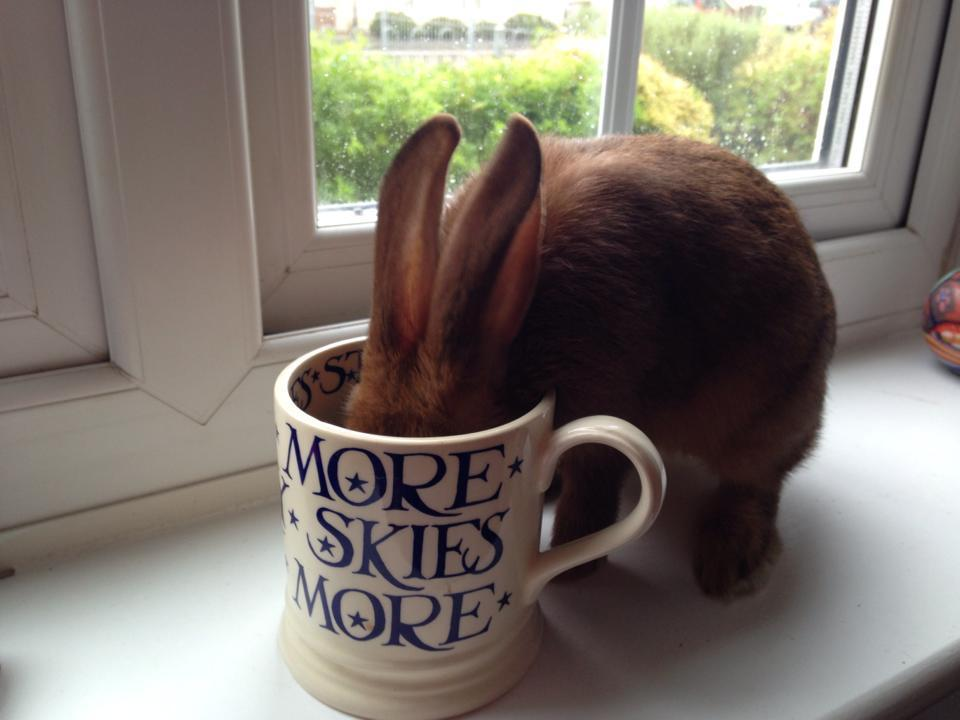 30 bunnies who have no regrets about taking over your house