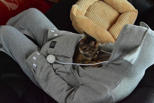 There's a sweatshirt with a pocket for your cat to sleep in and we want it