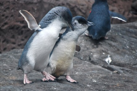 All the reasons super-tiny penguins are our latest obsession