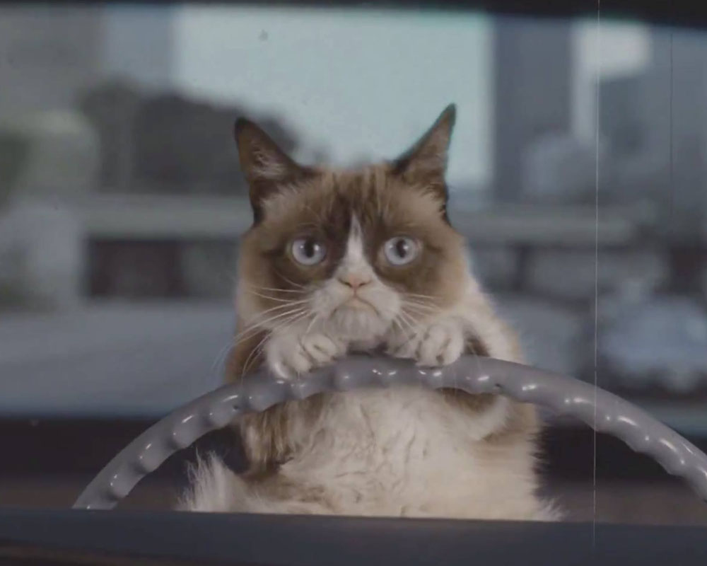 YES! Grumpy Cat is getting her own comic book