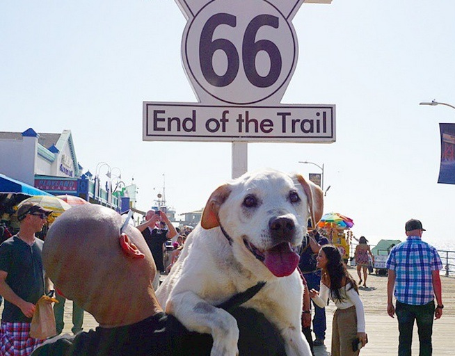 A dog and his owner take an epic road-trip before they have to say goodbye