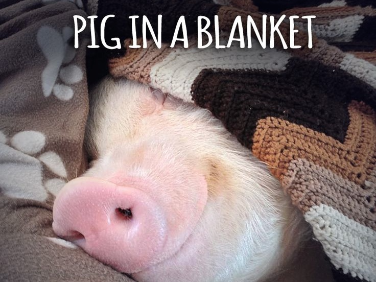 (Real) pigs in (actual) blankets. We so needed this.