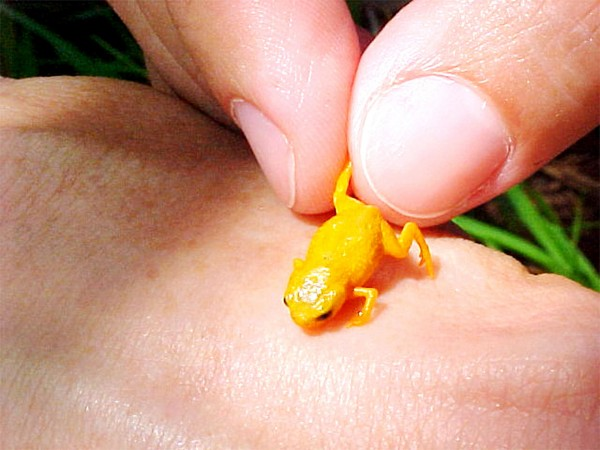 Mini frogs were just discovered and they're unreal cute