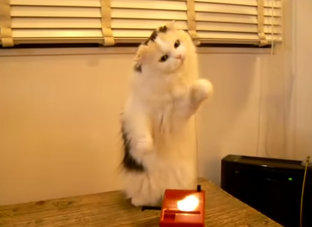 Here's a cat playing the theremin, because it's Wednesday