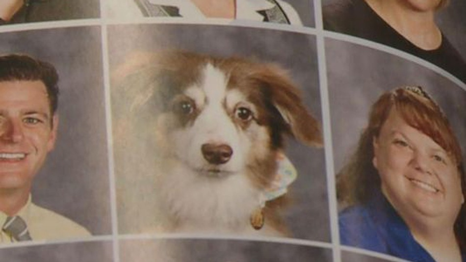 We're loving these service pups who (deservedly!) got their own high school yearbook photos
