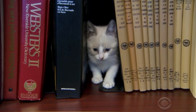 This kitten library is officially a thing (and we're officially obsessed)