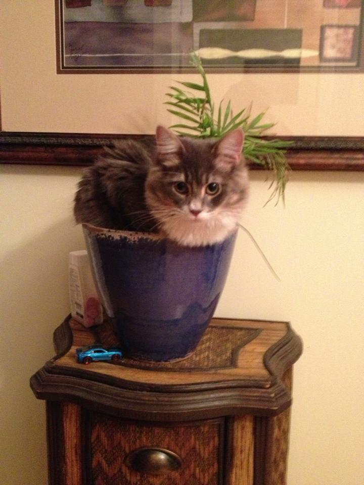 Just a bunch of cats who think they're house plants