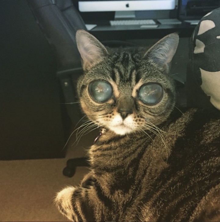 Falling in love with Matilda, the tabby cat with alien eyes