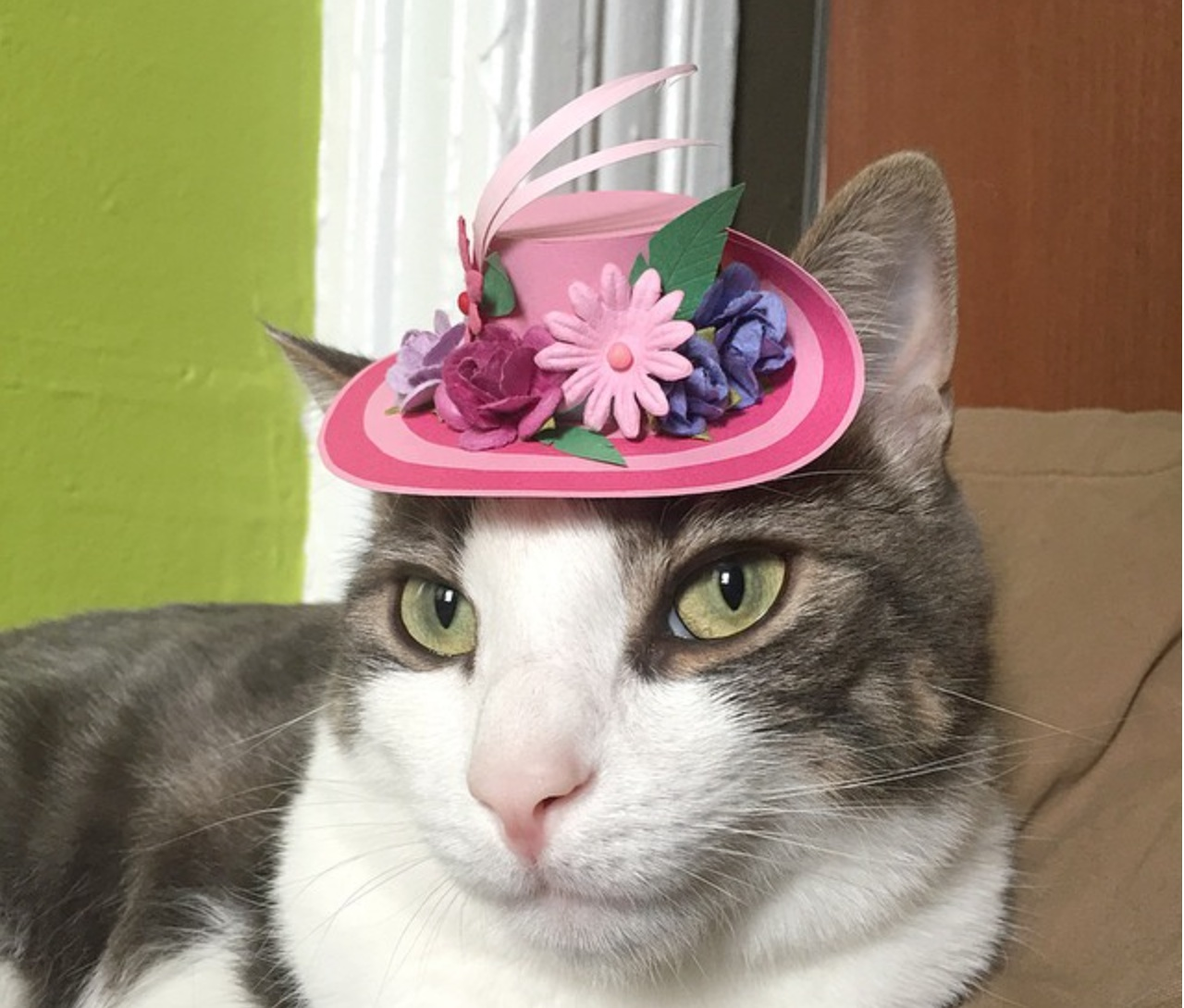 @TinyHatsOnCats is the Instagram account we never knew we needed