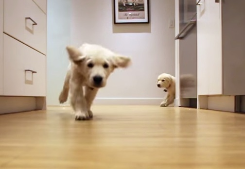 Please enjoy this time-lapse video of two hangry puppies, because Monday