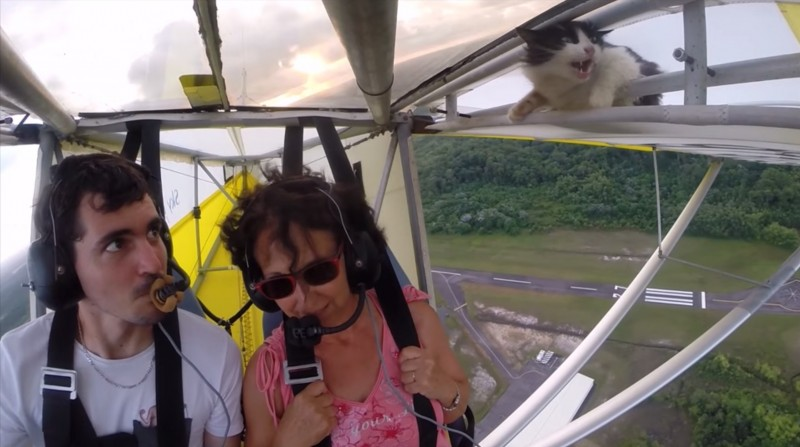 This cat snuck onto a glider and is now totally reevaluating her life choices