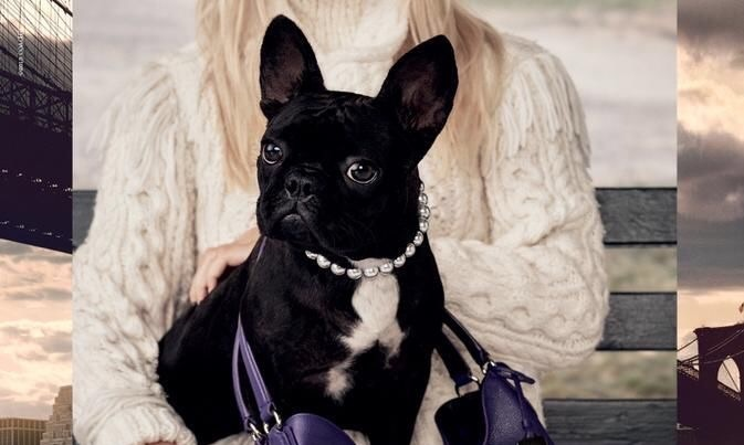 Lady Gaga's dog, Miss Asia Kinney, is officially a model. And she's gorgeous.