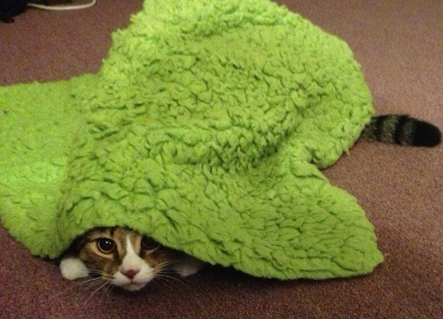 Just some pets who think they're really good at hiding. They are not.