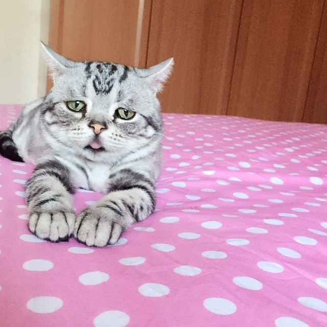 World's 'saddest' cat discovered. Turns out she makes people happy.