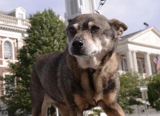 This dog just made history for one bonkers reason