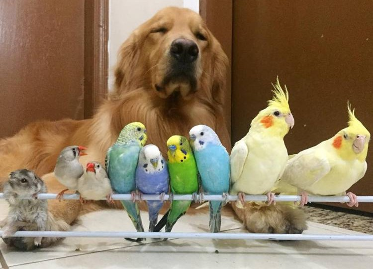 Just the best animal family we've ever seen