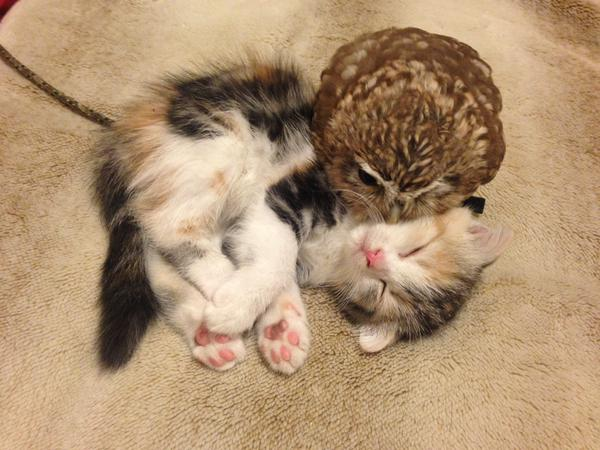 What? An owl and a kitten are nap besties? Unreal
