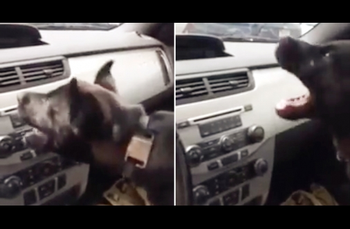 This puppy is everyone discovering the gift of air conditioning