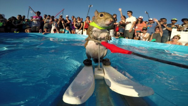 Twiggy the waterskiing squirrel is our new summer crush