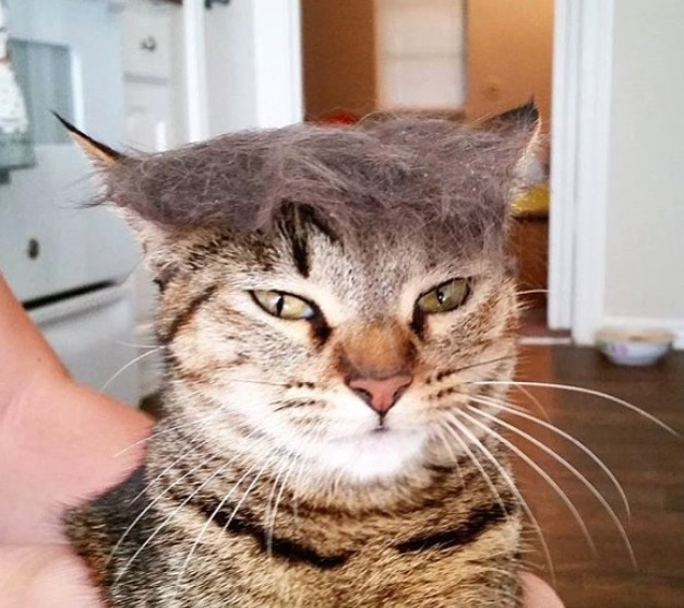 ICYMI: #TrumpYourCat is exactly what you think it is