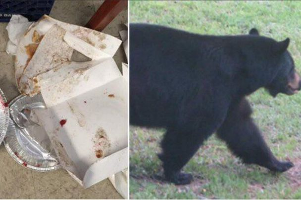 So, this bear broke into a bakery and ate all the pies