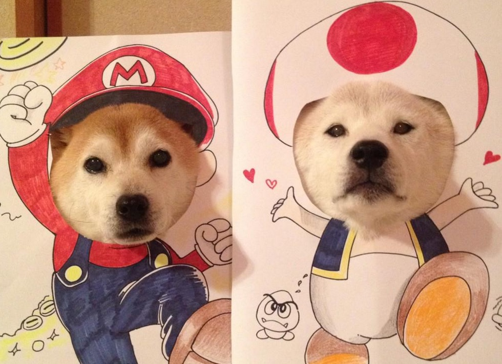These costumed pups are giving us dress-up envy