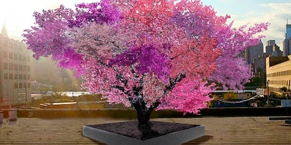 A college professor invented a tree that grows 40 different fruits. For real.