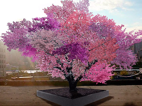 This amazing tree grows 40 different kinds of fruit