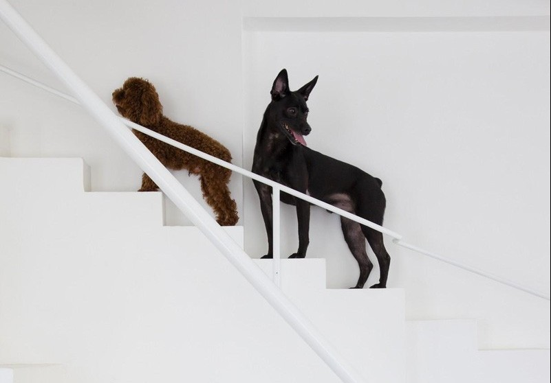 We are coveting this perfectly dog-sized staircase