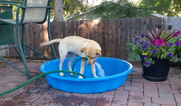 Summer situations: Maddie the puppy fills up a kiddie pool