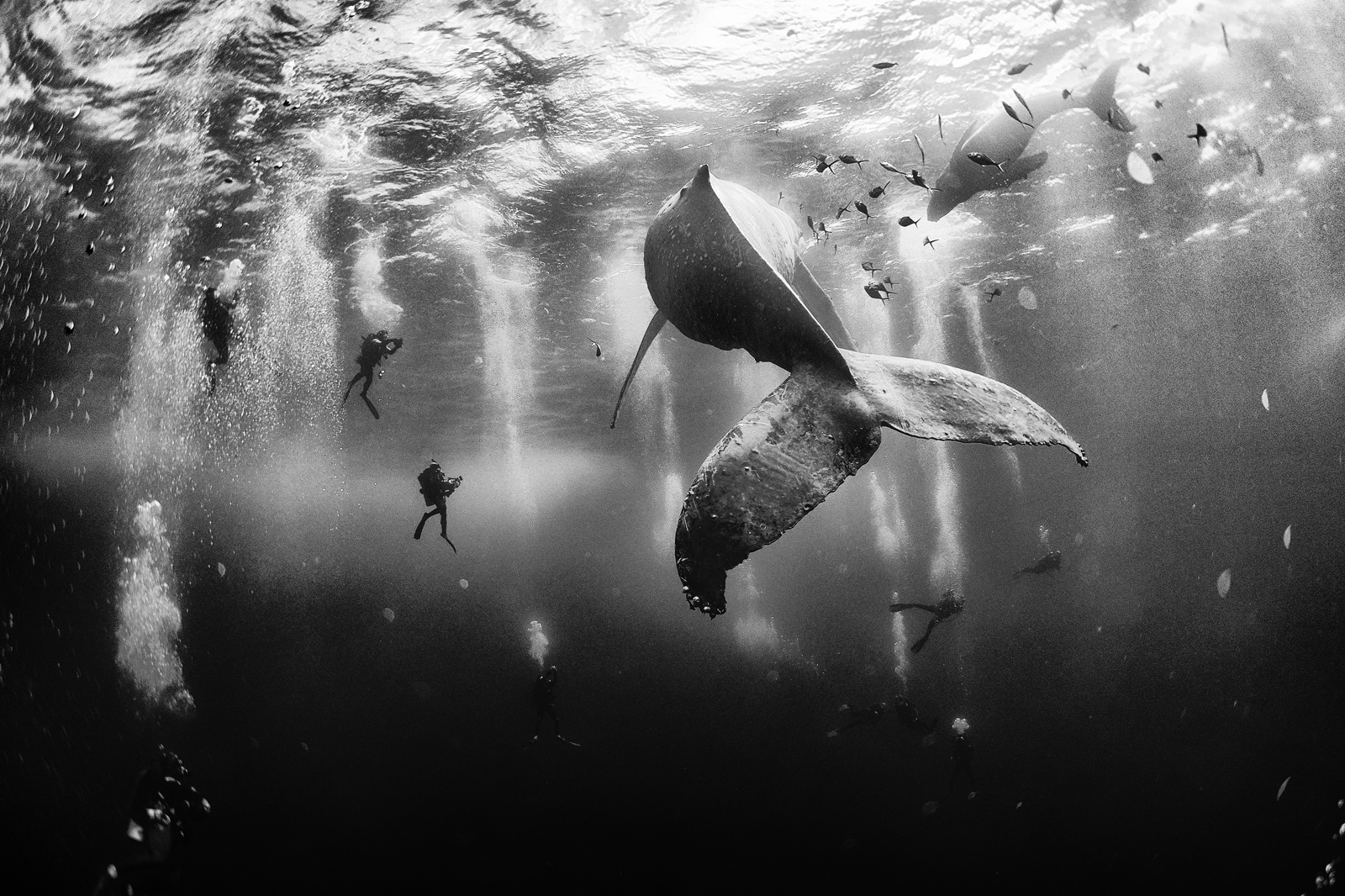 These stunning pictures just won the National Geographic Photo Contest