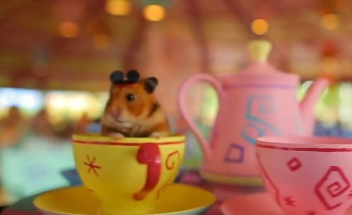 Tiny Hamster went to Disney World! Tiny Hamster went to Disney World!