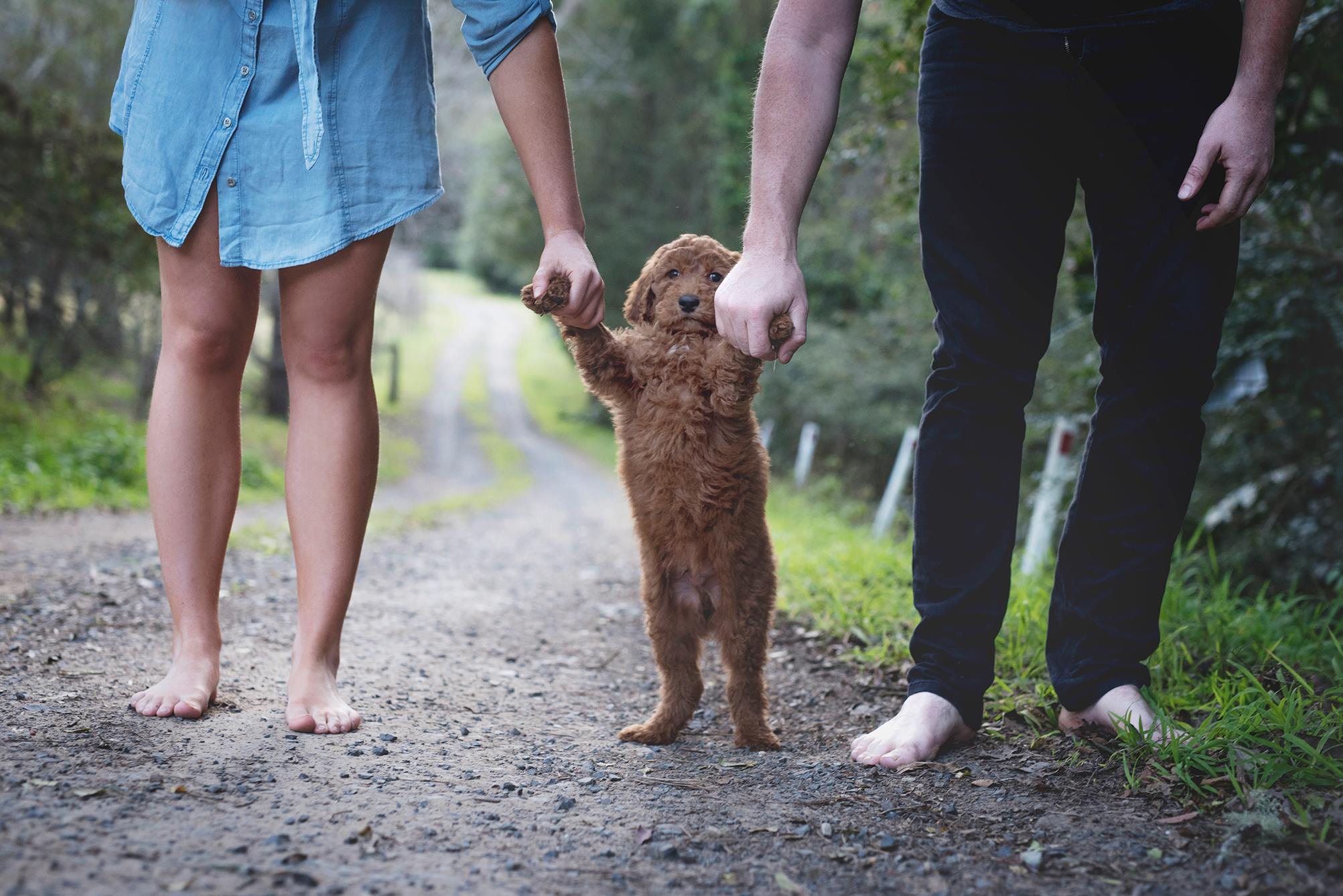 This couple staged a genius photo shoot with their dog to get people to stop asking about babies
