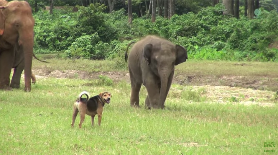 This dog has a friend-crush on a baby elephant, and the results are adorable