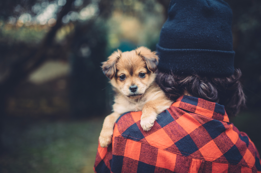 All the reasons dogs and humans are BFFs, according to science
