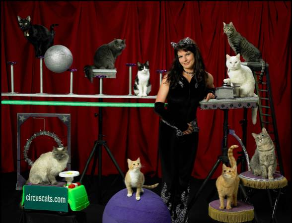 The cat circus is hiring, you say? SIGN US UP!