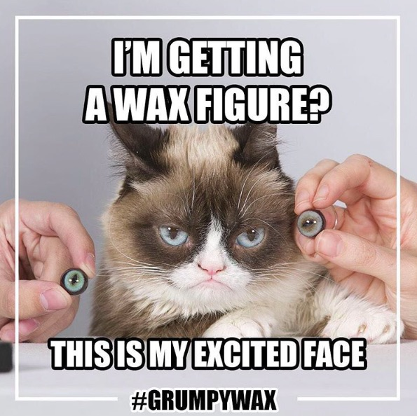 Grumpy Cat is getting her own wax figure (and she's the only one who's NOT excited about it)