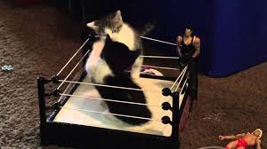 These kittens play-fighting in a miniature boxing ring are everything that's adorable