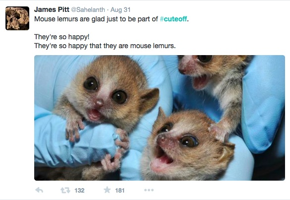 "Scientists get into social media feud re: what makes an animal ""cute"""
